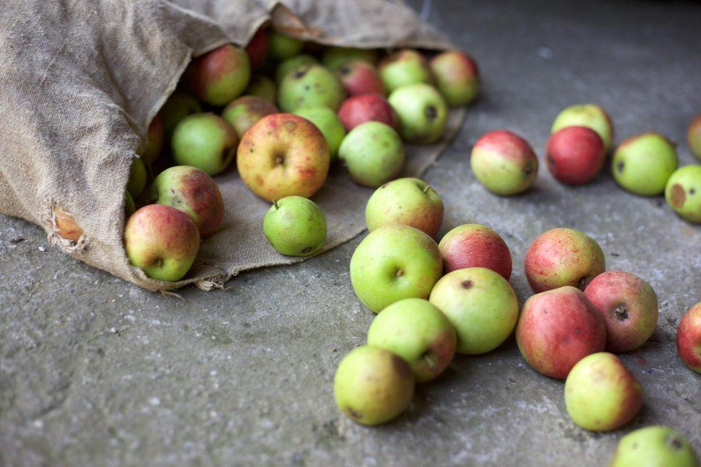 Ein umgefallender Leinenbeutel, aus dem viele reife Äpfel heraus gerollt sind.