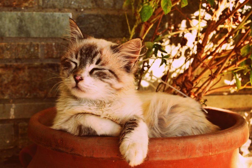 Fotobeschreibung: Nahaufnahme einer Katze, die entspannt und mit geschlossenen Augen in einem Blumenkübel liegt.