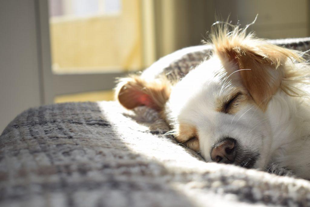 Nahaufnahme von einem schlafenden Hund